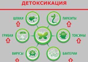 Механизмы детоксикации от алкоголя на дому
